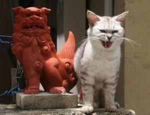 funnycat1__(6)