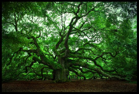 The Angel Oak taken by http://steelatlas.deviantart.com/